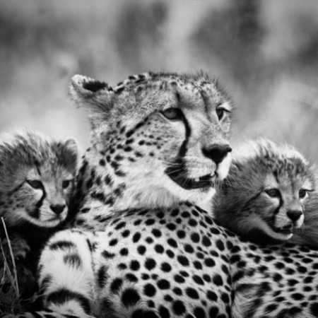 leem-wonen-wildlife-fotografie-umo-art-gallery-luipaard-foto-inlijsten