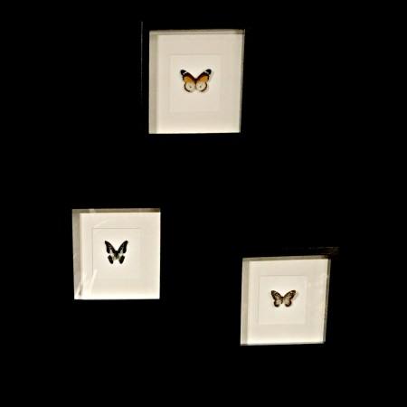 LEEM Wonen lookbook Excellent Wonen Beurs butterfly