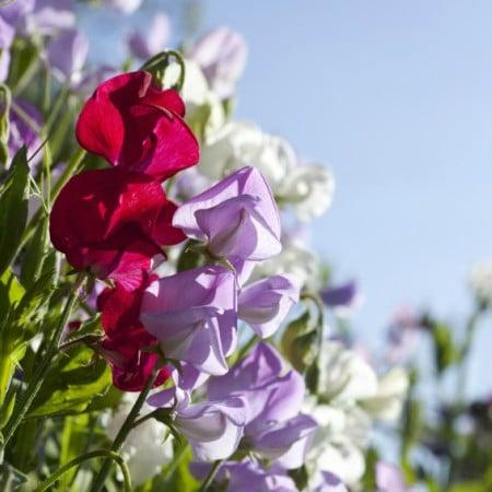 LEEM WONEN woonboerderij flowers