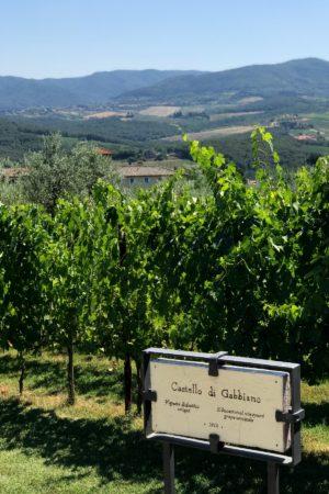 LEEM WONEN Toscane Castello di Gabbiano wijngaard